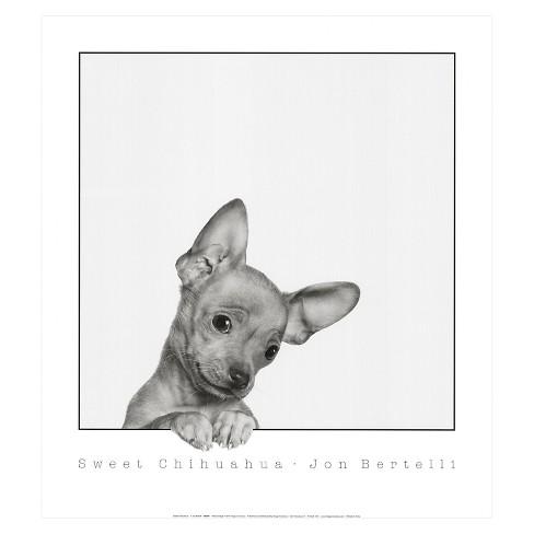 Sweet Chihuahua by Jon Bertelli Unframed Wall Art Print - image 1 of 2