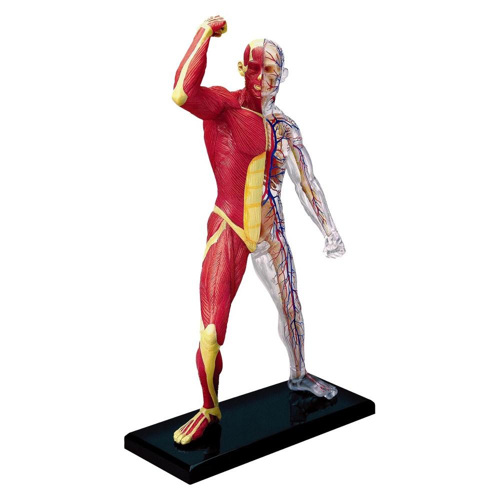 John Hansen 4D Master Human Muscle & Skeleton Anatomy Mod...