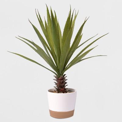 17  Potted Yucca Plant - Lloyd & Hannah