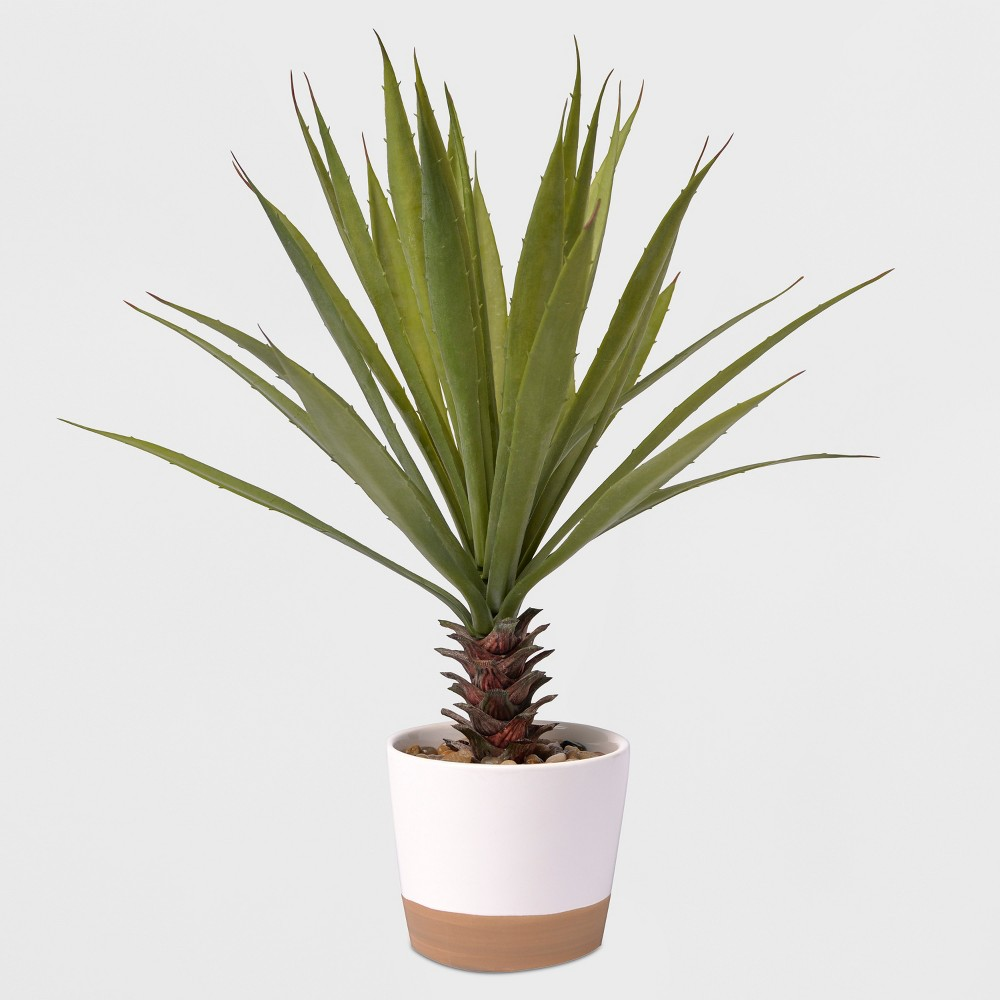 Image of 17 Potted Yucca Plant - Lloyd & Hannah