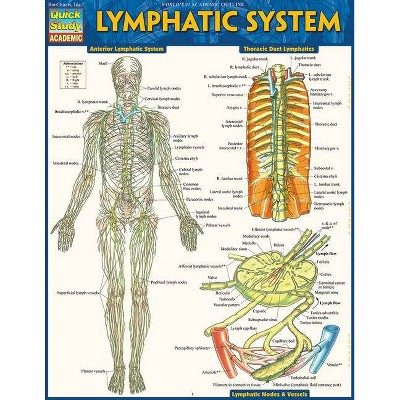 Lymphatic System - by  Vincent Perez (Poster)