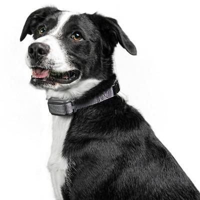 Premier Pet Rechargeable Bark Collar - Black