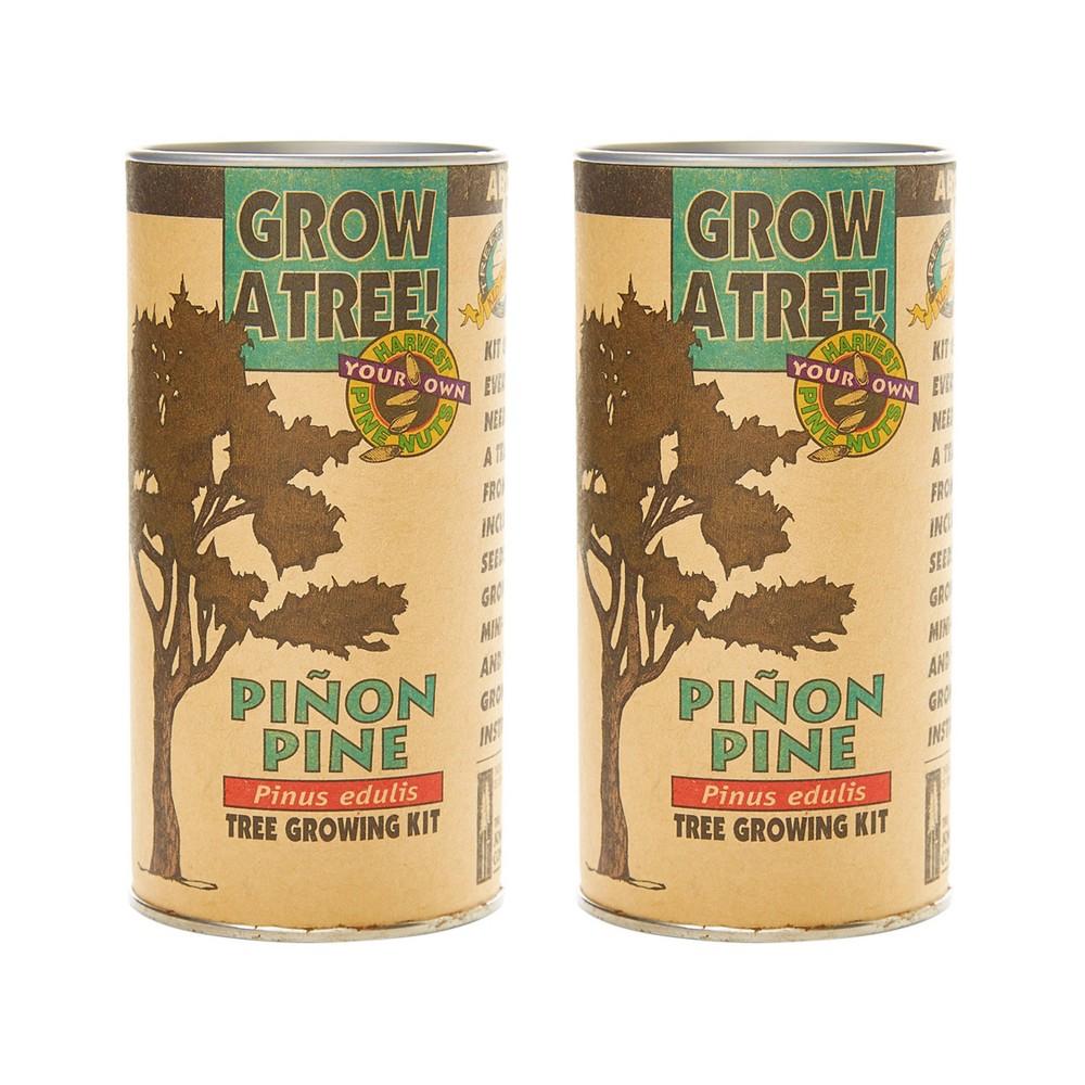 2pk Pinon Pine Seed Grow Kit The Jonsteen Company