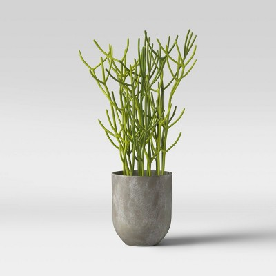 Faux Indian Tree Spurge Plant in Gray Pot - Project 62™