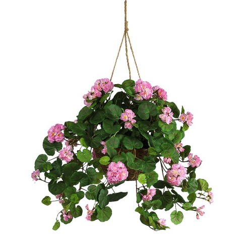 Image result for Geranium plant