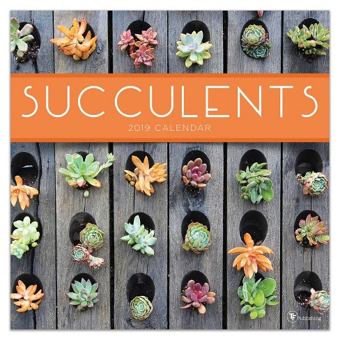 2019 Wall Calendar Succulents - TF Publishing - image 1 of 6