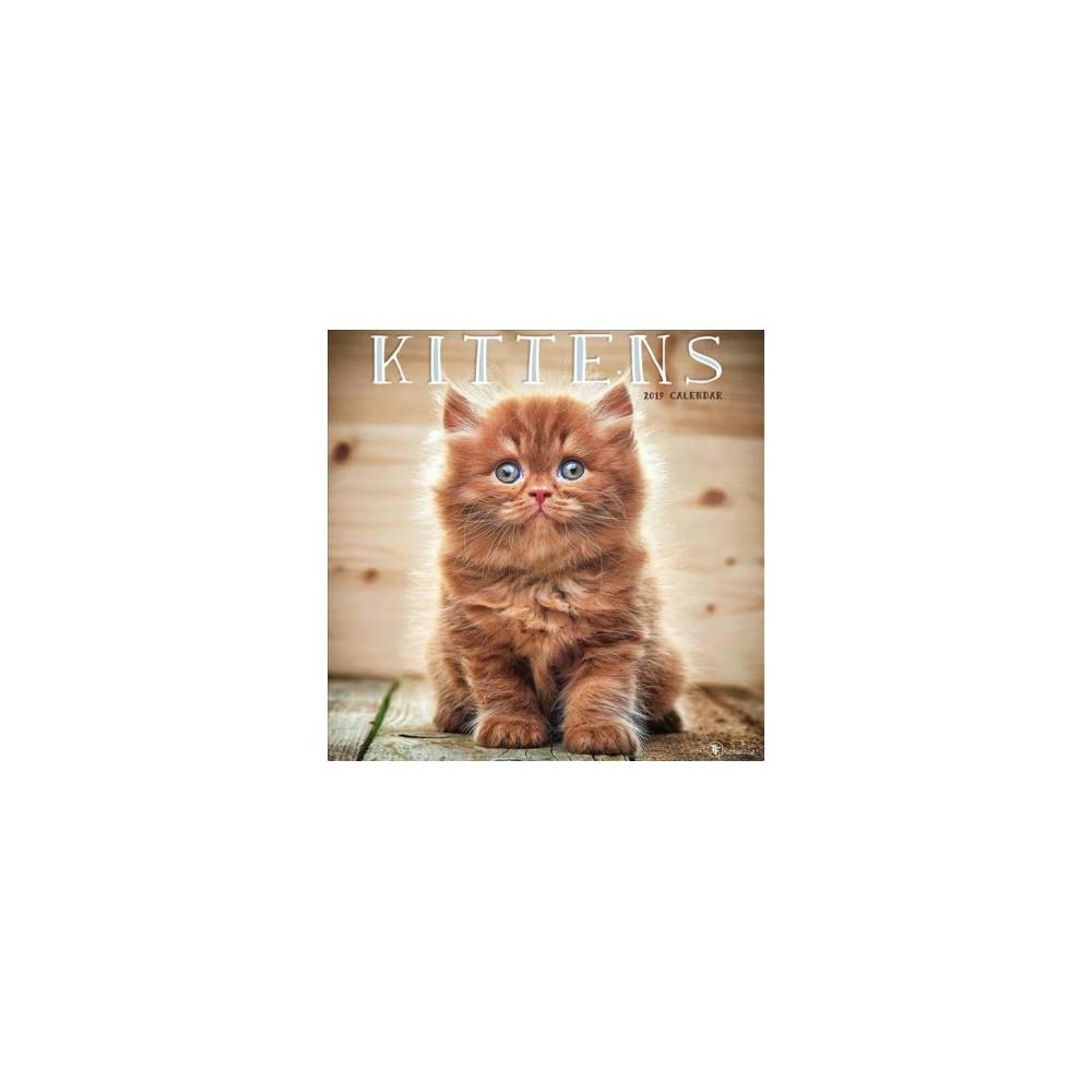 Kittens 2019 Calendar - (Paperback)