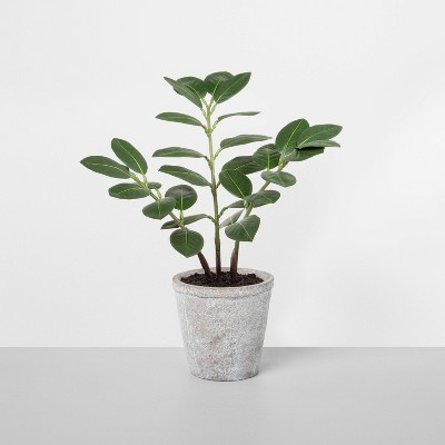 "15"" Faux ZZ Potted Plant - Hearth & Hand™ with Magnolia"