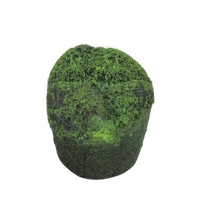 """Allstate Floral 3.5"""" Moss Soil Indoor Planter - Green/Black"""