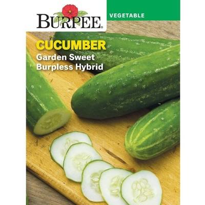 Burpee Cucumber Burpless Garden Sweet Burpless Hybrid