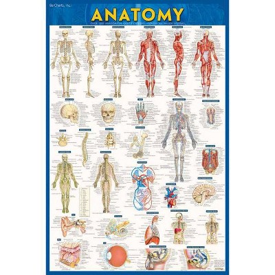 Anatomy Poster (24 X 36) - Paper - 2nd Edition by  Vincent Perez