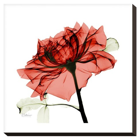 Ruby Rose 1 By Albert Koetsier Stretched Canvas Print - image 1 of 2