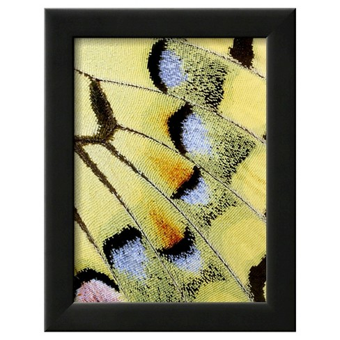 Art.com Wing of a Butterfly by Darrell Gulin - Framed Photographic Print - image 1 of 3