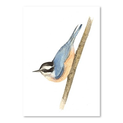 Americanflat Nuthatch by Cami Monet Poster