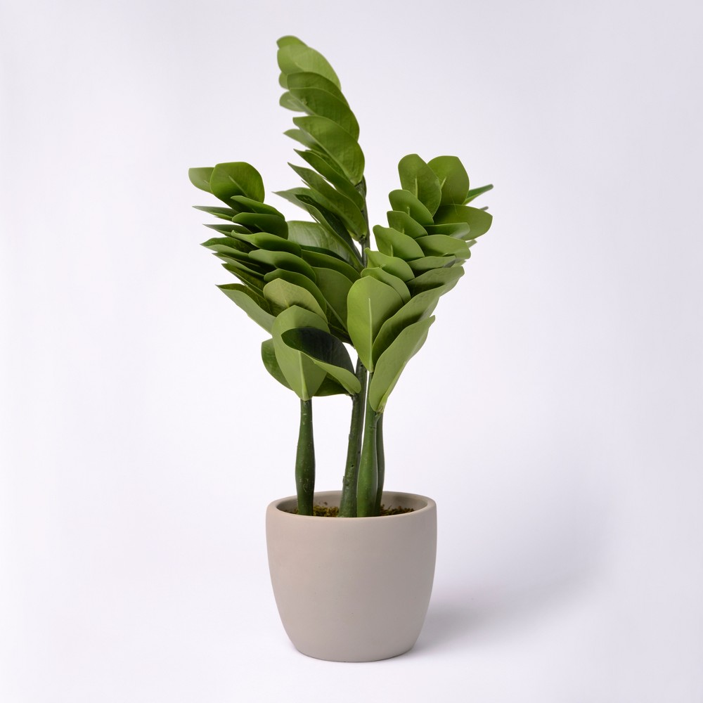 "Image of ""18"""" Potted Greenery - Lloyd & Hannah"""