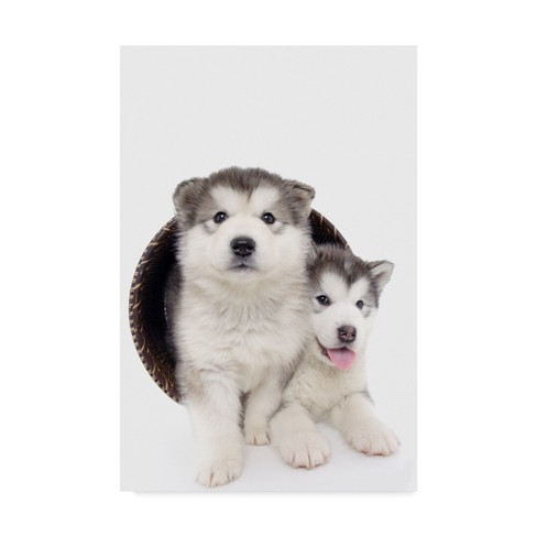 "Andrea Mascitti Puppies Two Puppies In Basket Unframed Wall 22""x32"" - Trademark Fine Art - image 1 of 3"