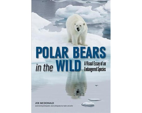 Polar Bears in the Wild : A Visual Essay of an Endangered Species -  by Joe McDonald (Paperback) - image 1 of 1