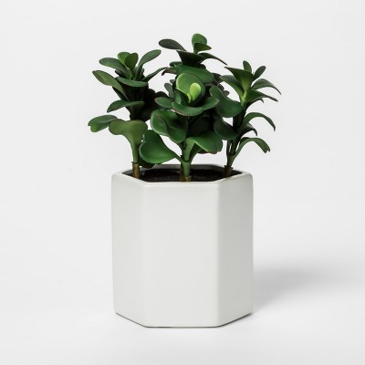 Faux Jade Plant in White Pot - Project 62™