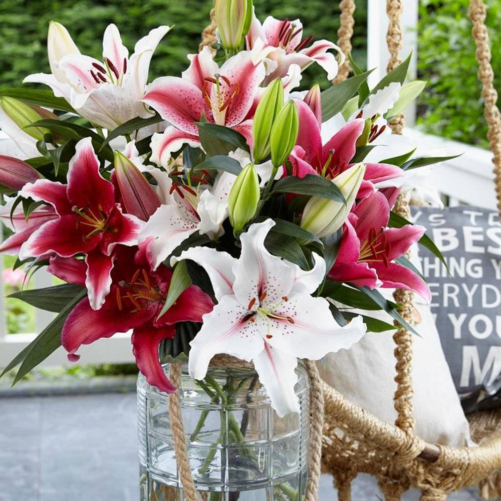 12 Bulbs Oriental Fragrant Cut Flower Blend Lilies - Van Zyverden