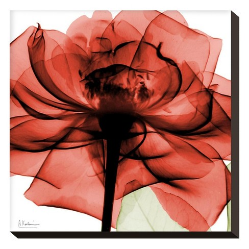 Ruby Rose 2 By Albert Koetsier Stretched Canvas Print - image 1 of 2