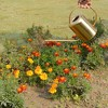 """9"""" Metal Watering Can - Project 62™ - image 3 of 4"""