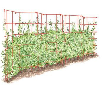 Expandable Pea Trellis Vegetable Garden Support for Climbing Plants and Flowers - Gardener's Supply Company