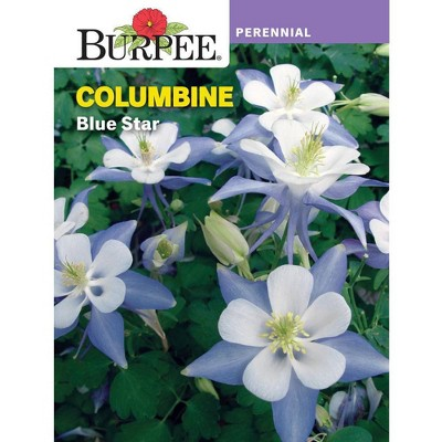 Burpee Columbine Blue Star