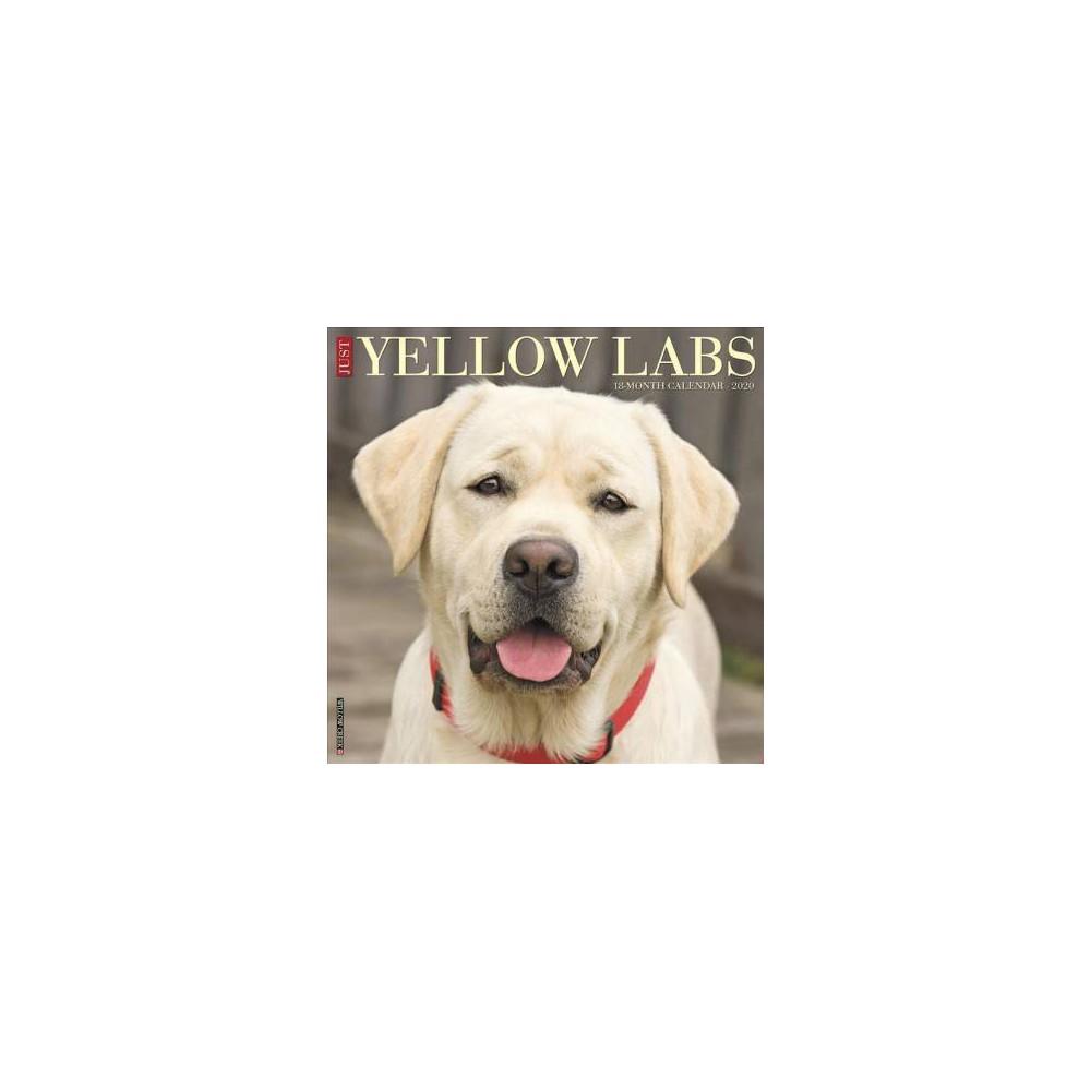 Just Yellow Labs 2020 Calendar - (Paperback)