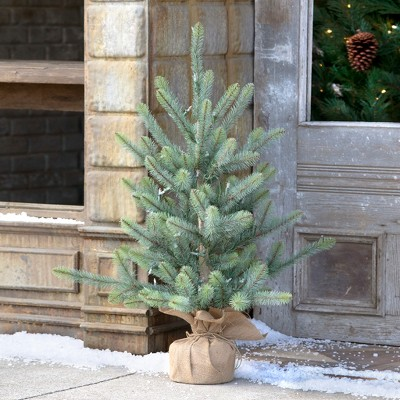 Park Hill Collection Burlap Wrapped Blue Spruce Seedling with LED Batt. Lights Med