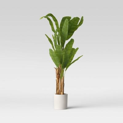 """72"""" Banana Tree in Cement Pot - Opalhouse™"""