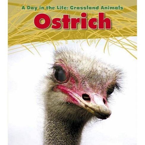 Ostrich - (Day in the Life: Grassland Animals (Paperback)) by  Louise A Spilsbury (Paperback) - image 1 of 1