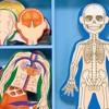 Melissa & Doug Magnetic Human Body Anatomy Play Set and Storage Tray - 24pc - image 3 of 3