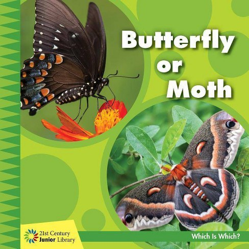 Butterfly or Moth - (21st Century Junior Library: Which Is Which?) by  Tamra Orr (Paperback) - image 1 of 1