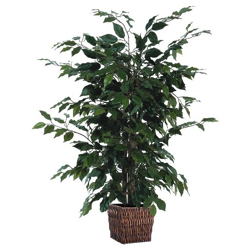 "Ficus Bush with Square Willow Container (48"") - image 1 of 1"