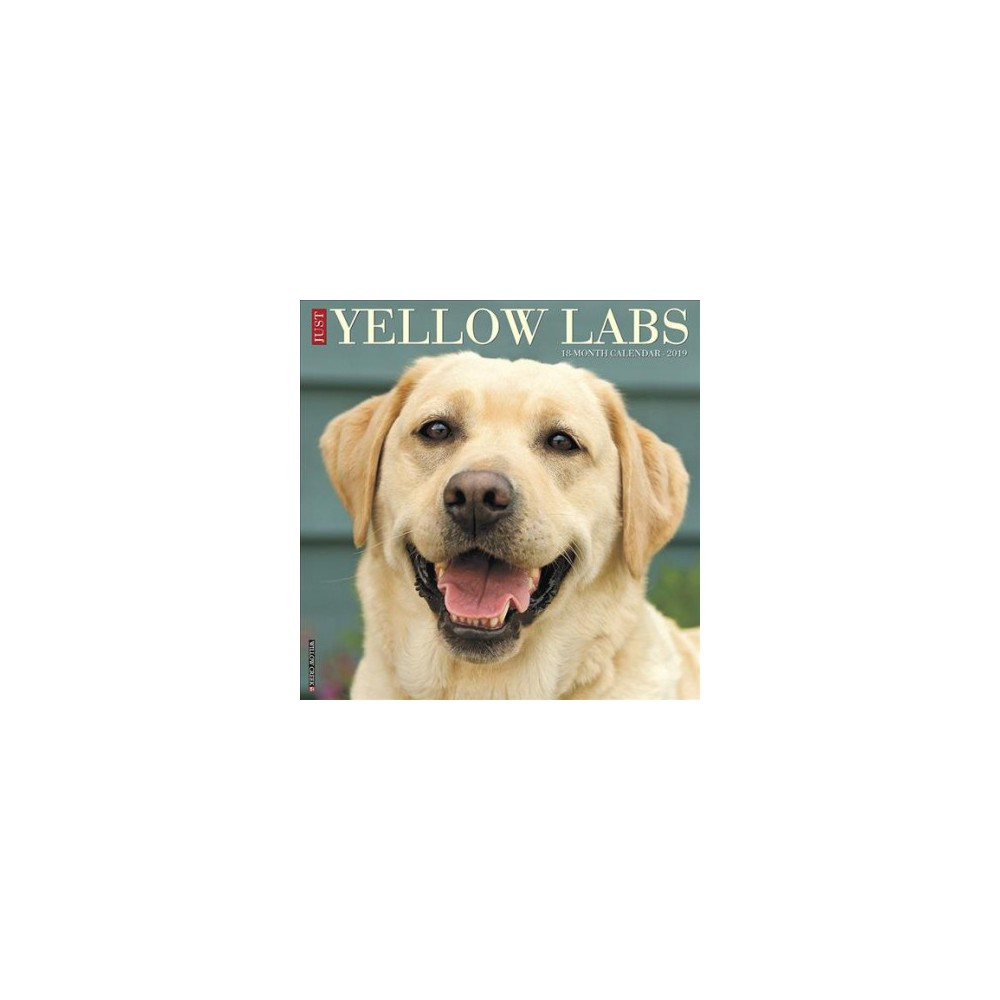 Just Yellow Labs 2019 Calendar - (Paperback)