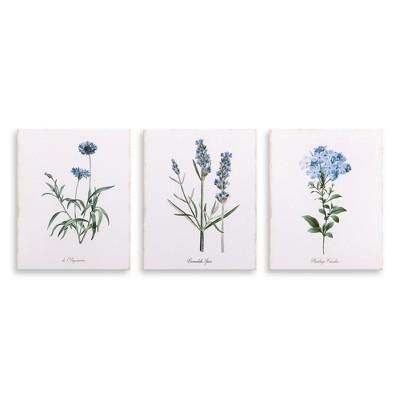 8 x10  3pc Lavender Botanical Drawing Canvas Art Lavender - Patton Wall Decor