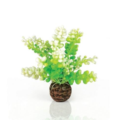 biOrb Aquatic Caulerpa Aquarium Artificial Plants - Green - image 1 of 1