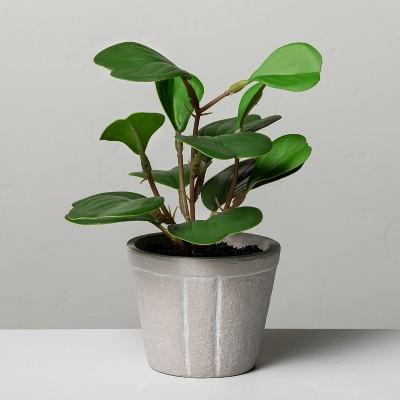 "7"" Mini Faux Hoya Heart Potted Plant - Hearth & Hand™ with Magnolia"