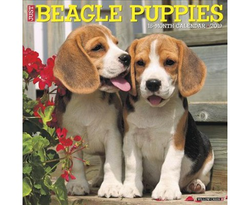 Just Beagle Puppies 2019 Calendar -  (Paperback) - image 1 of 1