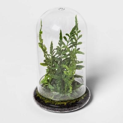 "9"" x 5.5"" Artificial Fern in Glass Terrarium - Threshold™"