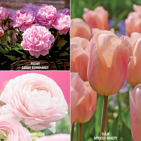 Color Your Garden Pink Collection Set of 40 Bulbs - Pink - Van Zyverden - image 1 of 3