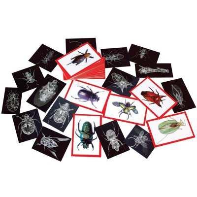Roylco Insect X-Ray and Picture Cards