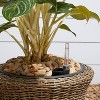 Ocala Curved Oval Self-Watering Planter Mocha - Vifah - image 2 of 4