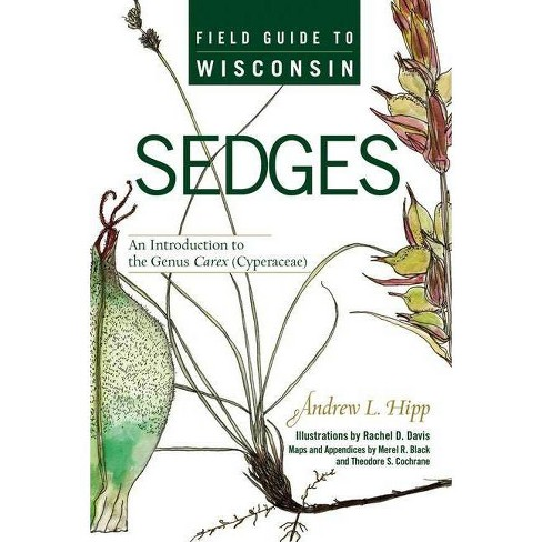 Field Guide to Wisconsin Sedges - by  Andrew L Hipp (Paperback) - image 1 of 1