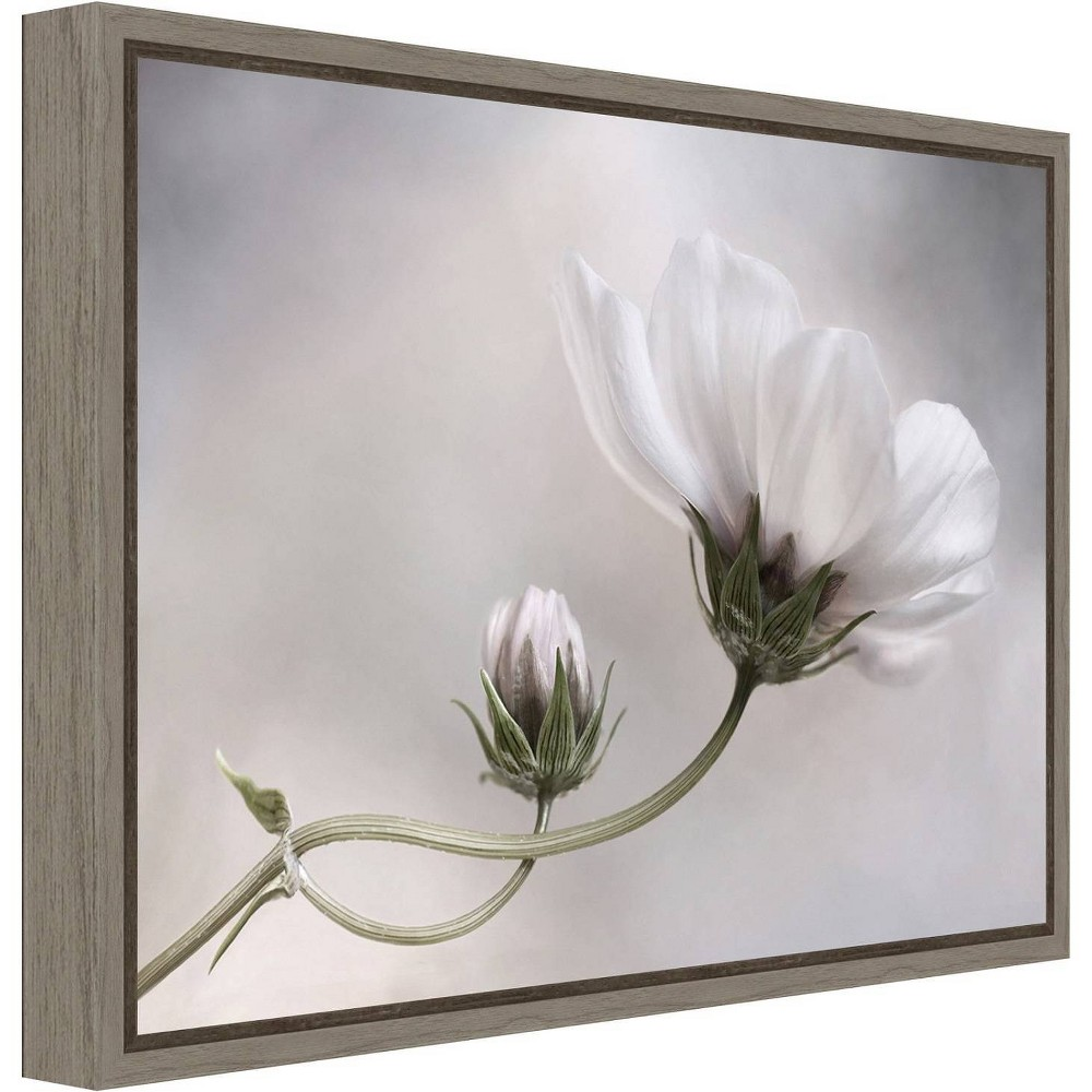 "Image of ""23"""" X 16"""" Simply Cosmos By Mandy Disher Greywash - Amanti Art, White Gray"""