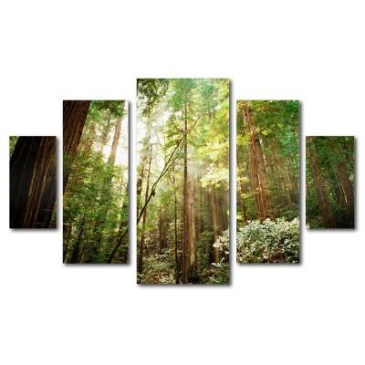 5pc Muir Woods by Ariane Moshayedi - Trademark Fine Art