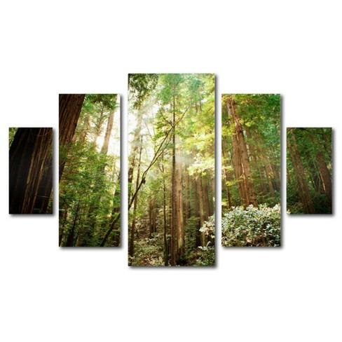 5pc Muir Woods by Ariane Moshayedi - Trademark Fine Art - image 1 of 4