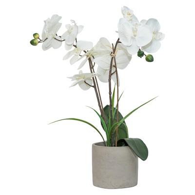 Artificial Orchid Arrangement in Cement Pot White 20  - Lloyd & Hannah