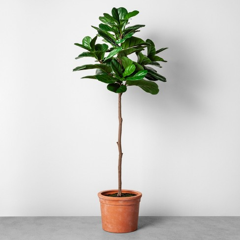 Faux Fiddle Leaf Plant in Terracotta Pot Large - Hearth & Hand™ with Magnolia - image 1 of 1