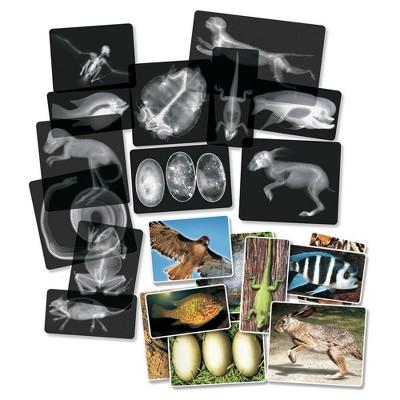 Roylco Animal X-Rays